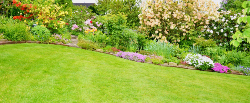 5 Essential Spring Lawn Care Tips