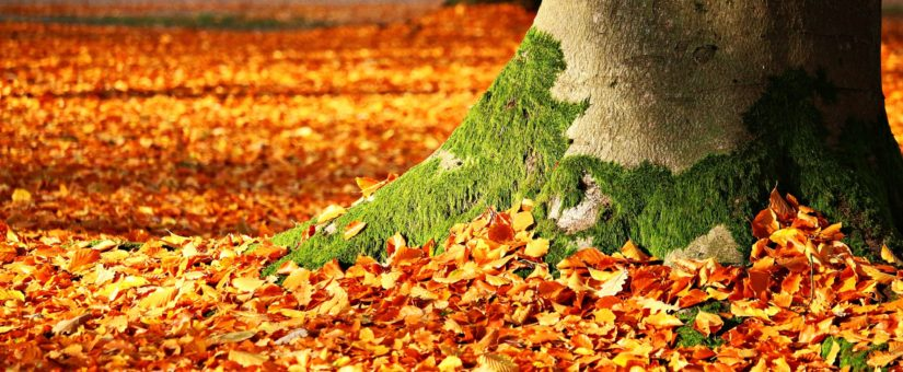 4 Ways to Put Fall Leaves to Work in Your Garden